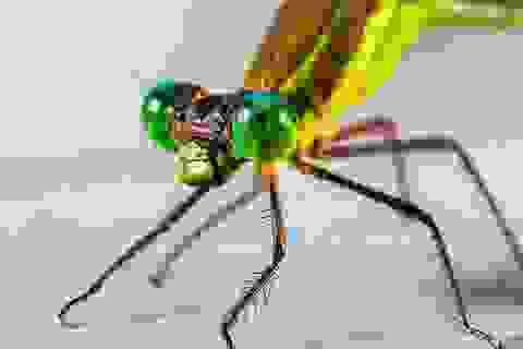Xâm nhập vào cơ thể côn trùng để tạo ra máy bay sinh học