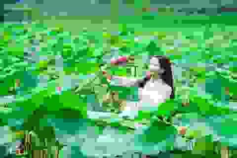 Lên lịch chụp ảnh ở những hồ sen tuyệt đẹp quanh Hà Nội