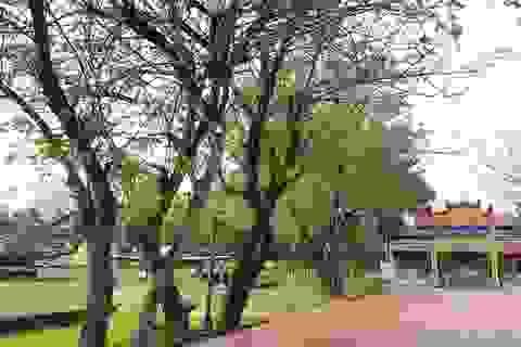 Chuyển Bảo tàng Lịch sử Thừa Thiên Huế đến nơi mới vào 2019
