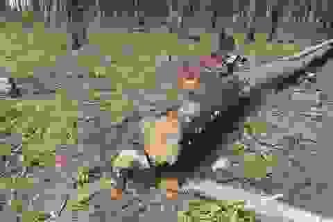 Thanh tra doanh nghiệp của nhà nguyên lãnh đạo công an tỉnh vụ bán đất rừng