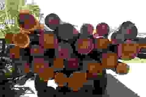 Nóng vấn đề rút ruột rừng Tây Nguyên