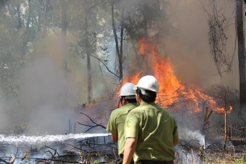 Hơn 300 người dập đám cháy rừng giả định