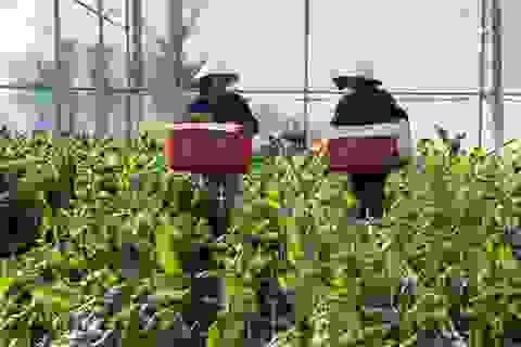 MM Mega Market Việt Nam đặt mục tiêu tăng gấp đôi sản lượng rau củ