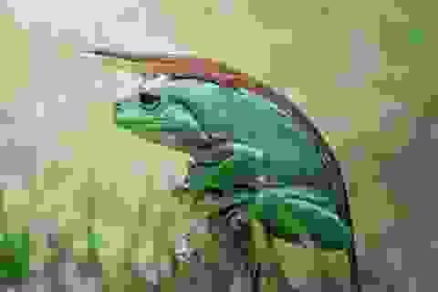 Những khoảnh khắc đẹp mê mẩn trong thế giới động vật