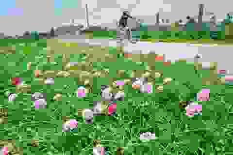 """Thêm những hình ảnh tuyệt đẹp về con đường hoa mười giờ gây """"sốt"""""""