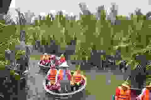 """""""Băm nát"""" rừng dừa nước Bảy Mẫu để làm du lịch"""