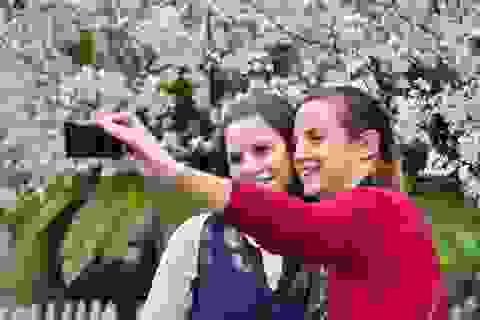 Khách Tây thích thú với lễ hội hoa anh đào ở Hà Nội