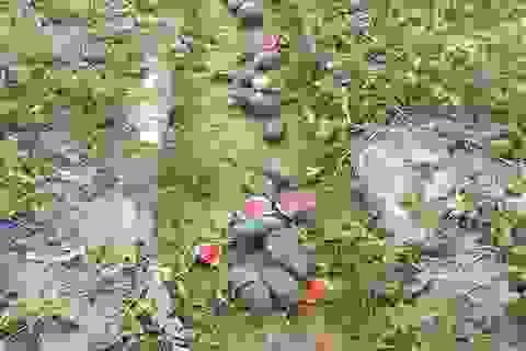 Nhiều ruộng dưa hấu bị phá nát trong đêm