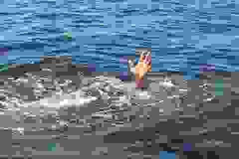 Đuổi theo con gà nước, 2 học sinh tử vong