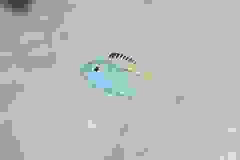"""Một loài cá là """"ma túy"""" đối với kẻ thù của nó"""