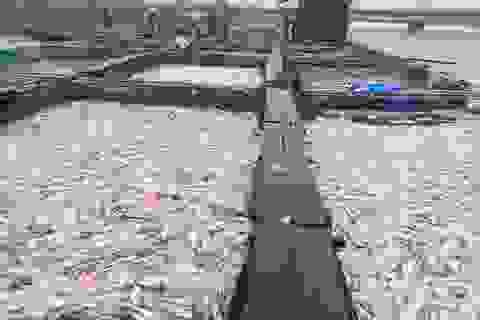 Hàng trăm tấn cá bè chết trắng sông, người dân khóc nức nở