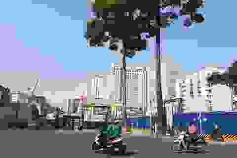 TPHCM chặt thêm hàng loạt cây xanh phục vụ tuyến metro số 1