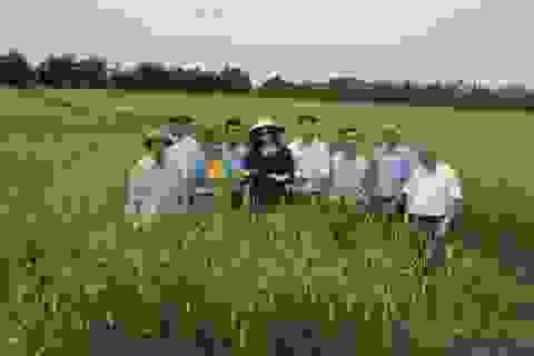 """Chàng trai trẻ """"ngược dòng"""" gặt hái thành công từ hạt gạo quê hương"""