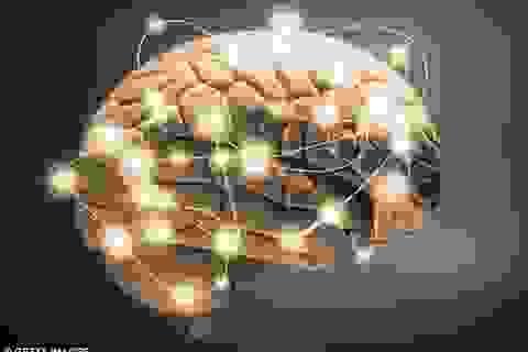 Phát hiện ra gen chủ đạo ngăn chặn tình trạng làm chết các tế bào não