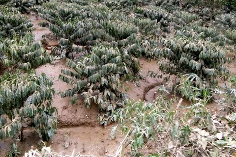 Lũ quét nhấn chìm hàng chục ha cây trồng của người dân