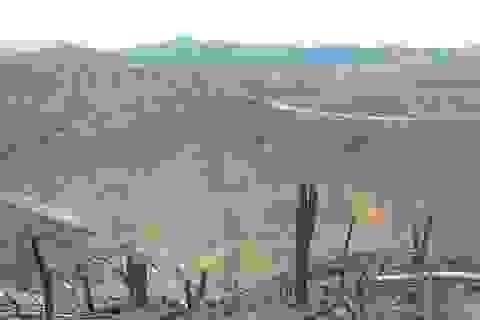 Nghịch lý: Công ty lâm nghiệp phá rừng cũ để… trồng rừng mới?