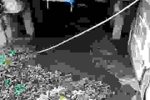 Dân vẫn khốn khổ vì ô nhiễm dù có trạm xử lý nước thải 42 tỷ đồng