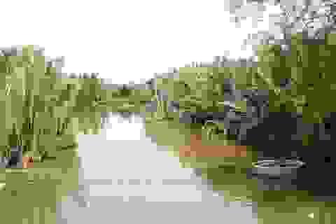 """""""Hy sinh"""" 50 ha rừng dừa để xây hồ chứa nước cho nhà máy giấy"""