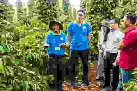 Giải pháp nâng cao hiệu quả sản xuất cà phê Việt Nam