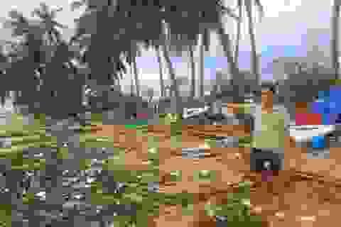 Giám đốc cùng 7 nhân viên vượt bão biển cứu sống hơn 200 người