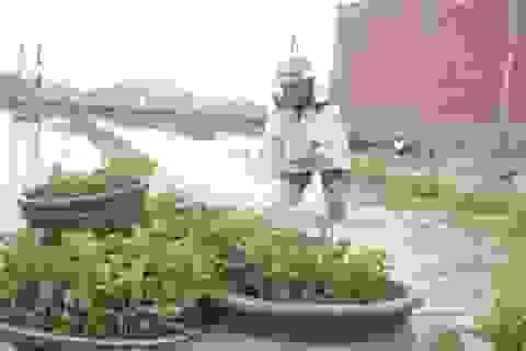 Người nông dân bật khóc giữa thủ phủ hoa cúc
