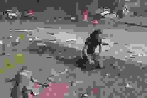 Rơi nước mắt với hình ảnh nhiếp ảnh gia quỳ khóc bên em bé bị trúng bom