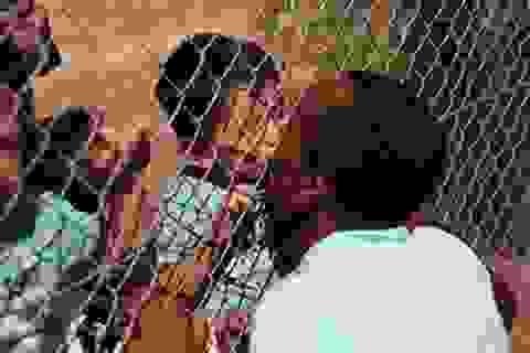 """Hình ảnh """"em bé hôn cha qua hàng rào trại tị nạn"""" khiến dân mạng rơi nước mắt"""