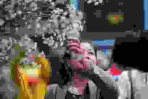 Những hình ảnh chưa đẹp tại Lễ hội hoa anh đào 2017