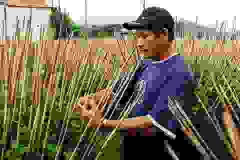 Thiệt hại 65.000 chậu hoa Tết do mưa lũ, người dân than trời