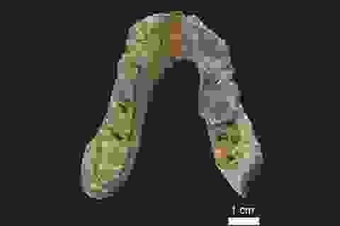 Mẫu hóa thạch người tiền sử thách thức thuyết tiến hóa hiện nay