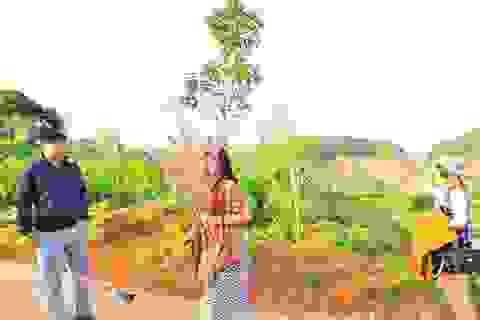 """Vụ Phó Giám đốc sở """"bẻ hoa"""" ở Đà Lạt: Bình Thuận chỉ đạo làm rõ"""