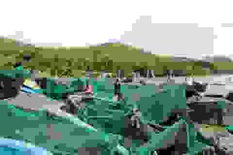 Cho người dân bị thiệt hại do bão số 12 khoanh nợ và vay mới