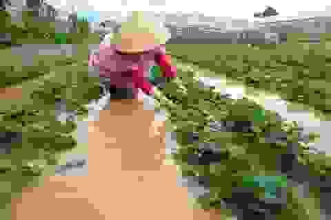 Nhiều khu dân cư và vườn tược ở Đà Lạt ngập sâu cả mét