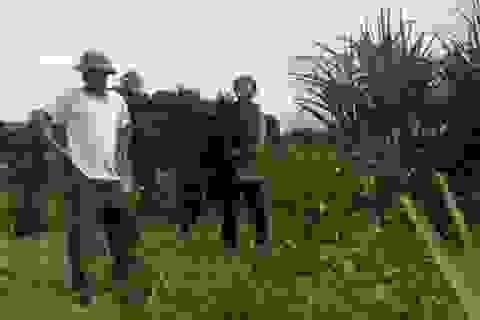 Bàng hoàng phát hiện vườn keo non bị chặt phá tan hoang
