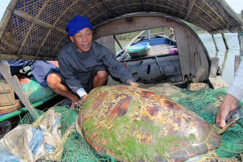 """Cận cảnh rùa biển nặng gần 1 tạ """"vướng lưới"""" ngư dân"""
