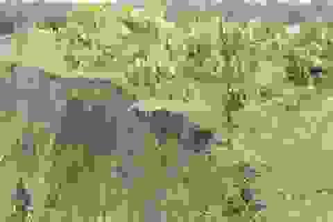 Sạt lở đất, hơn 10ha cà phê bị hư hại