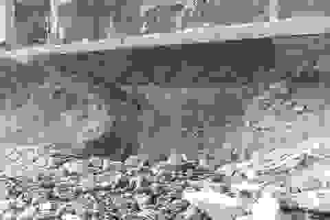 """Gấp rút """"vá"""" con đường chưa xây xong đã sụt sâu hàng mét ở Hà Nội"""
