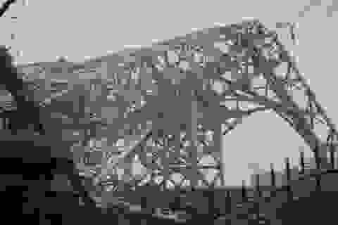 Lập tổ điều tra sự cố sập 2 tháp truyền hình trong bão số 10