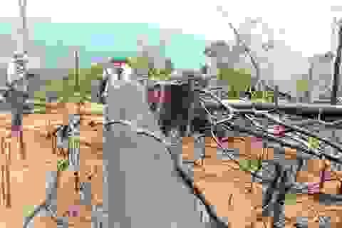 Thủ tướng yêu cầu xử lý nghiêm vụ phá rừng ở Quảng Nam