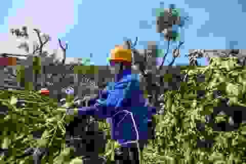Công trường chặt hạ, đánh chuyển hàng nghìn cây xanh trên đường Phạm Văn Đồng