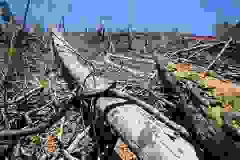 Vụ phá rừng phòng hộ Tiên Lãnh: Sẽ rút lên tỉnh để điều tra?