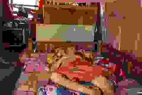 Hai cha con bị chấn thương não không tiền chữa trị