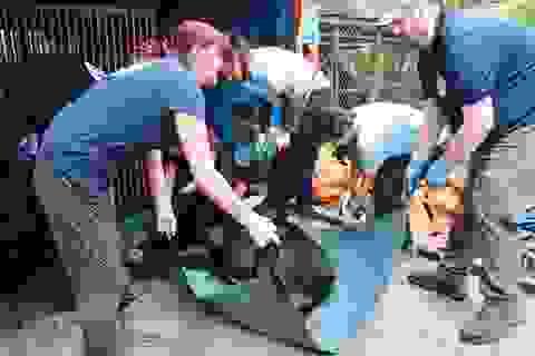 Công viên động vật hoang dã quốc gia đón 3 cá thể gấu đầu tiên