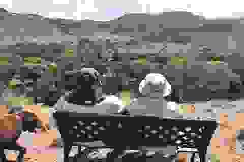 Nghị sĩ McCain leo núi cùng con sau phẫu thuật ung thư