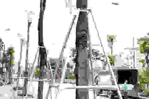"""Hàng loạt cây xanh trên vỉa hè Hà Nội được """"đeo gông sắt"""""""