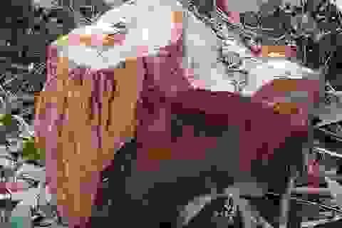 Những dấu hiệu bất thường từ việc phá rừng?