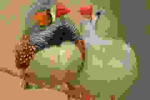 Điểm chung giữa con người và chim là gì?