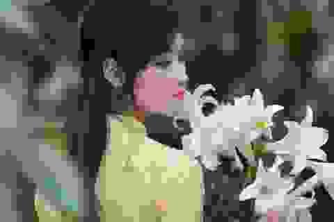 Thiếu nữ Hà thành duyên dáng bên sắc hoa loa kèn đầu mùa