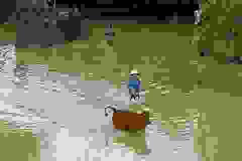 Nước sông Lam lên nhanh, người dân bình thản đón lũ