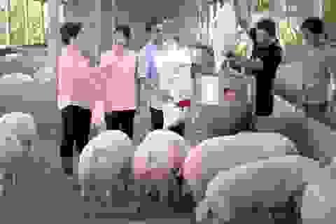 Masan đầu tư chiến lược nhằm hỗ trợ người chăn nuôi